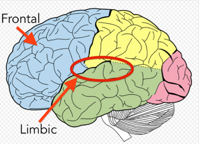 train the brain.png