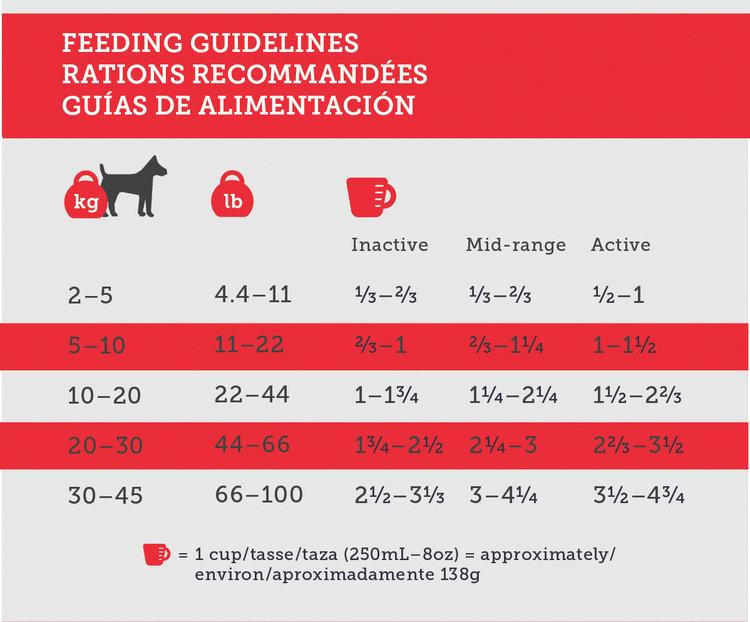 Guía de alimentación para perros.