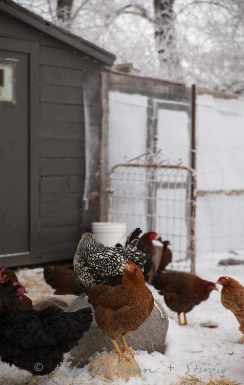 2+chickens+blog-3340.jpg