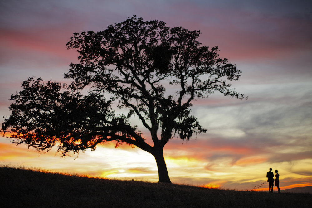 A lone oak and two lost souls at magic hour. The Magic Hours - a film by Zoey Taylor and David Connelly