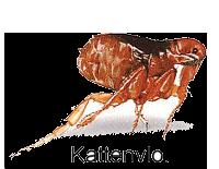 KATTENVLO