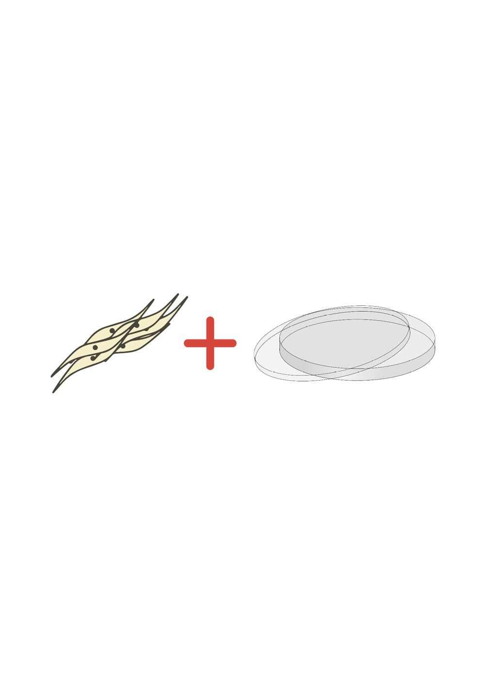 Afin de créer le logo, l'utilisation de deux symboles reliés à la recherche est additionnée. Le premier étant une schématisation cellulaire d'une grappe en stellate (cellule mammaire saine) et le second est associé directement à la recherche scientifique (la boite de pétri dans lequel les cultures organiques sont entreposées afin de procéder aux divers tests nécessaires).