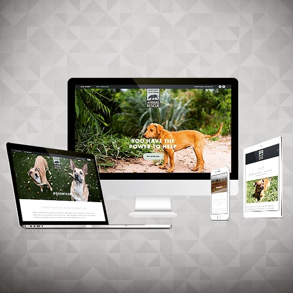 We did it: our new site is live! Please support us in our mission to help animals.