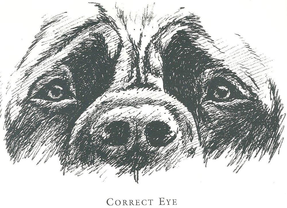 Eyes - Correct eye.jpg