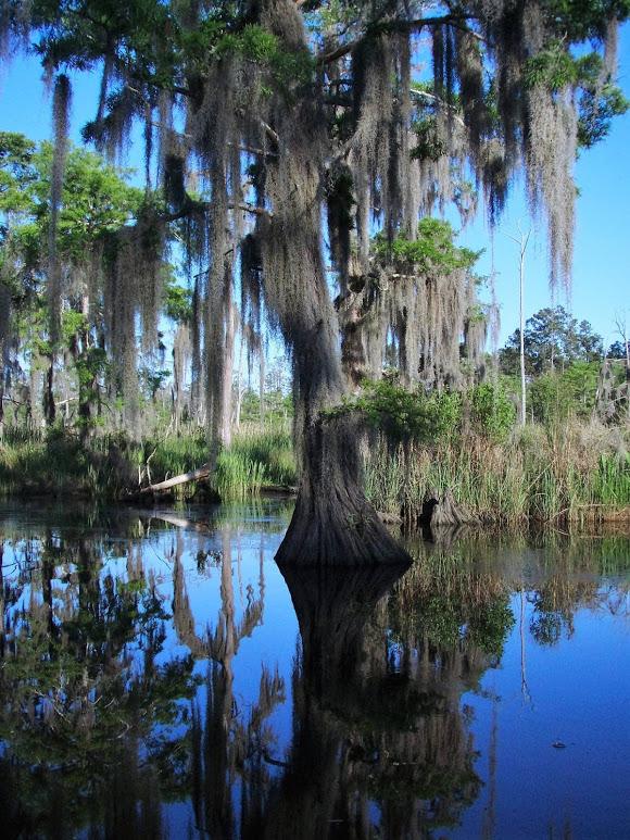 swamp-snaps-2016-074.jpg