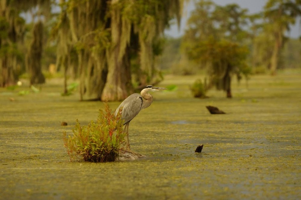 swamp-snaps-2016-071.jpg