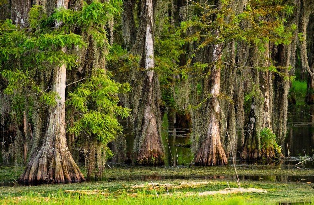 swamp-snaps-2016-001.jpg