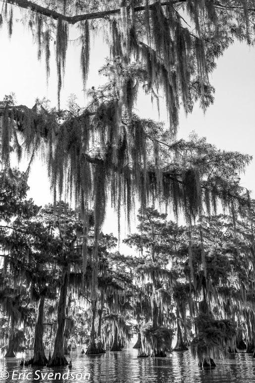 swamp-snaps-2016-013.jpg