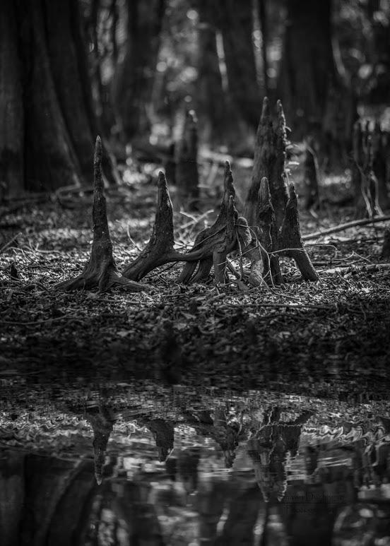 swamp-snaps-2016-017.jpg