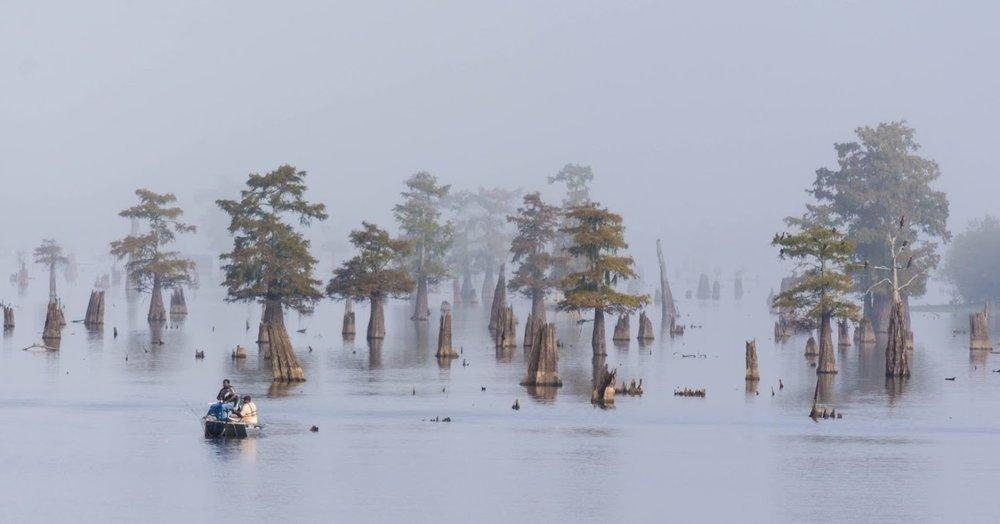 swamp-snaps-2016-024.jpg