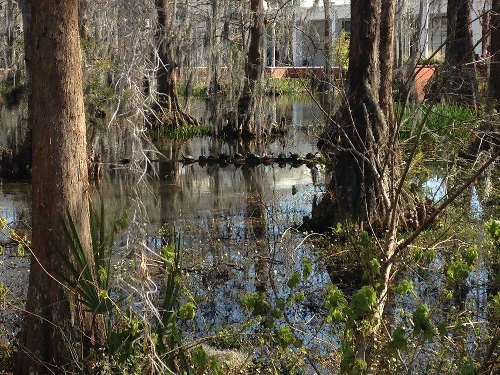 swamp-snaps-2016-027.jpg