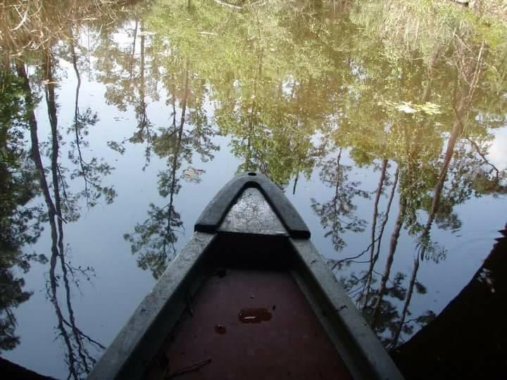 swamp-snaps-2016-032.jpg