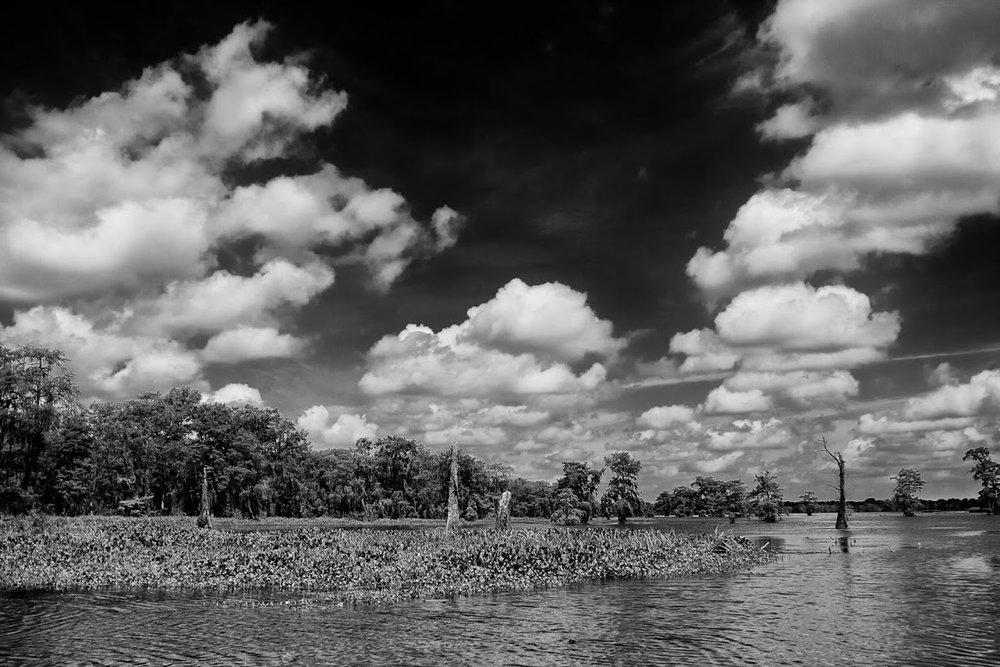 swamp-snaps-2016-033.jpg