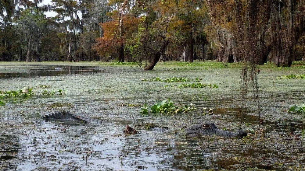 swamp-snaps-2016-037.jpg