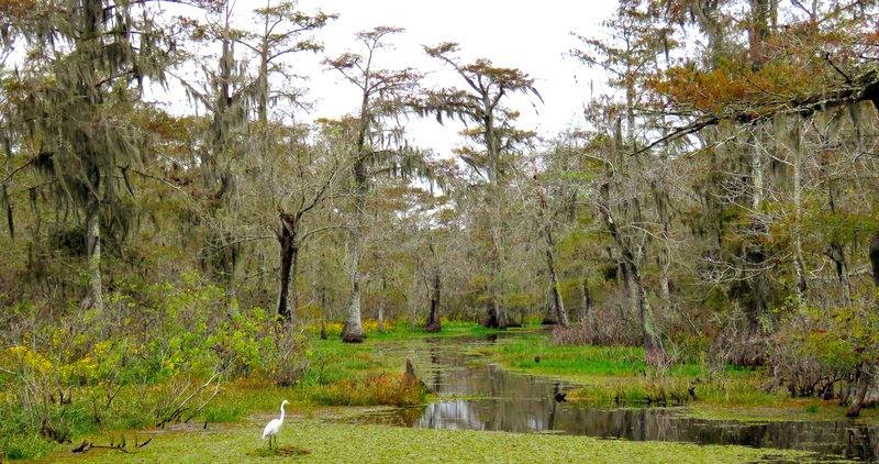 swamp-snaps-2016-040.jpg