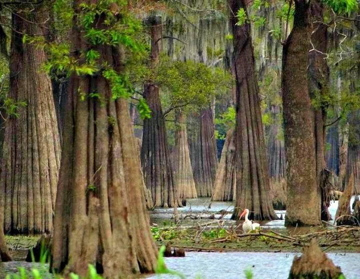 swamp-snaps-2016-043.jpg
