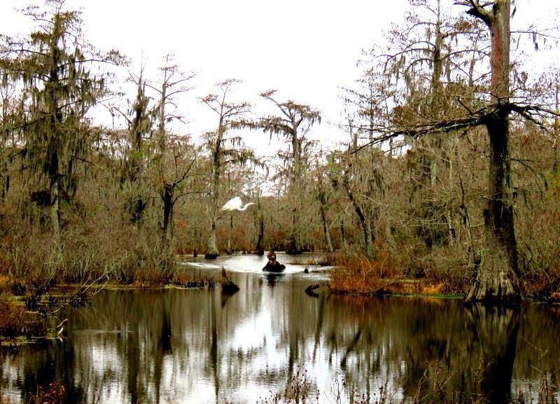 swamp-snaps-2016-044.jpg