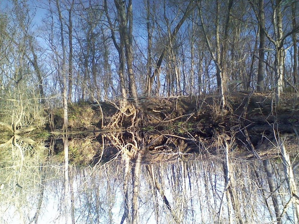 swamp-snaps-2016-045.jpg