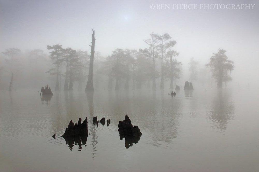 swamp-snaps-2016-053.jpg