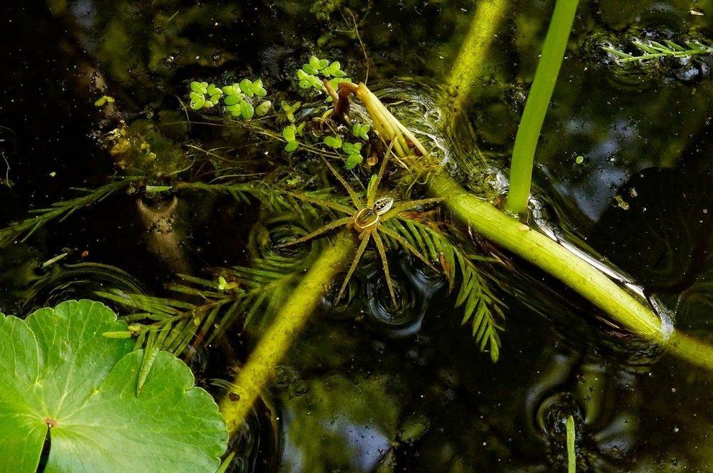 swamp-snaps-2016-070.jpg