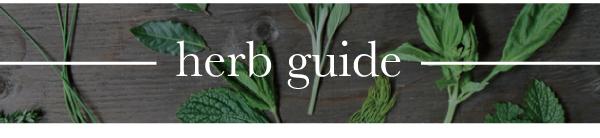Herbs_v1_06.jpg