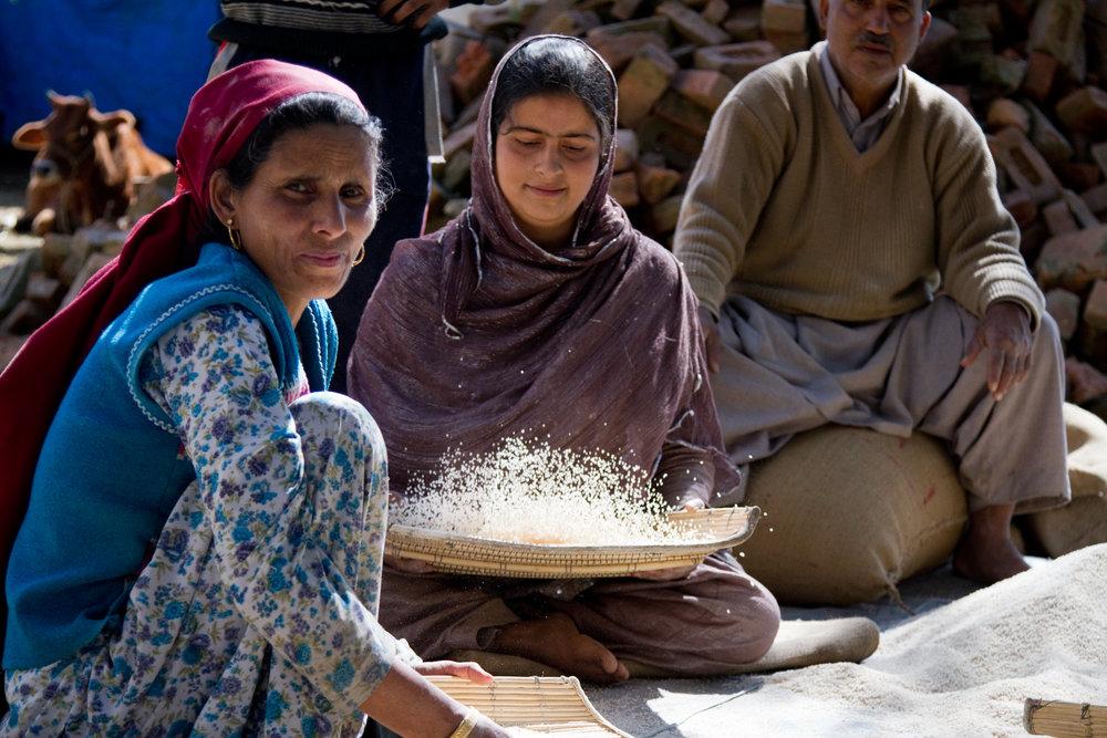 Winnowing Rice, Kashmir