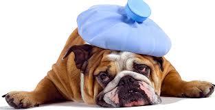 dog icebag