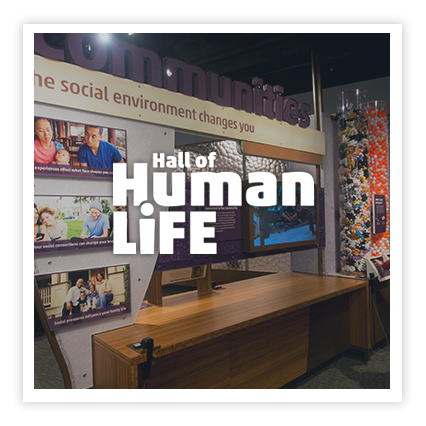 Hall of Human Life Exhibition - 10,000 sq. ft. permanent exhibitionat the Museum of Science