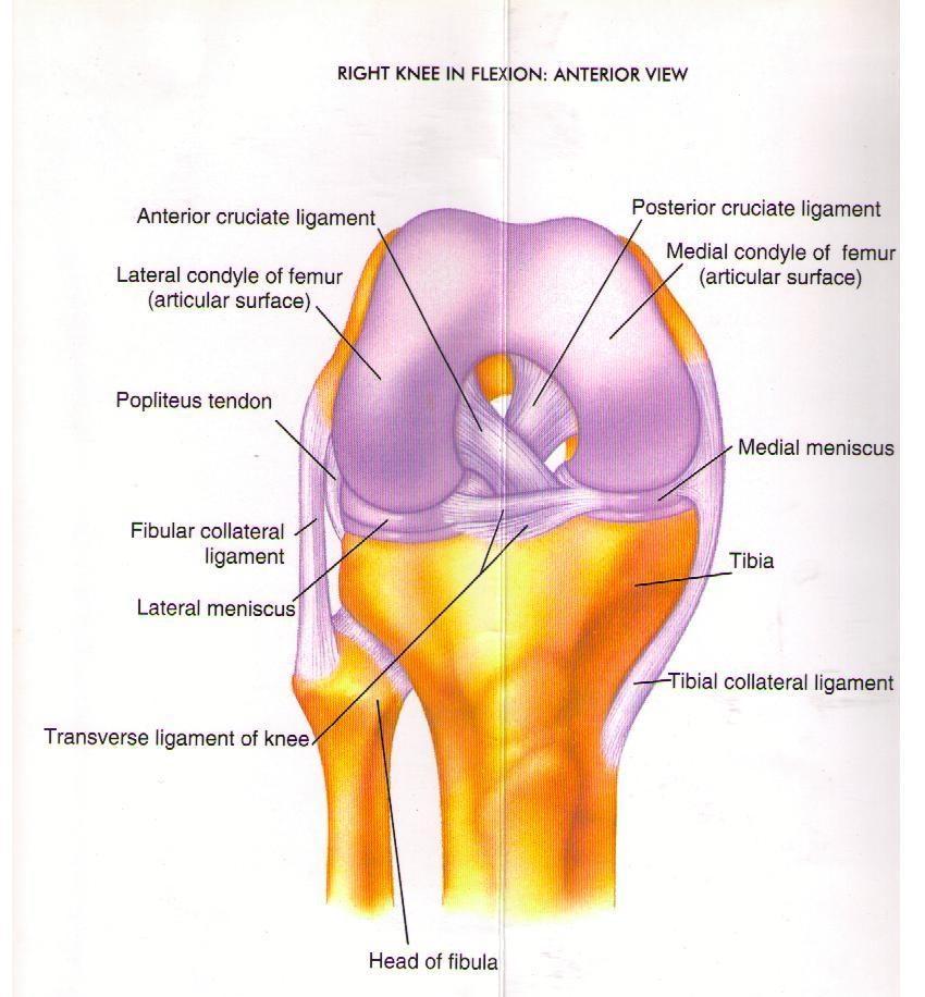Knee-Injury-and-Pain-Diagram.jpg