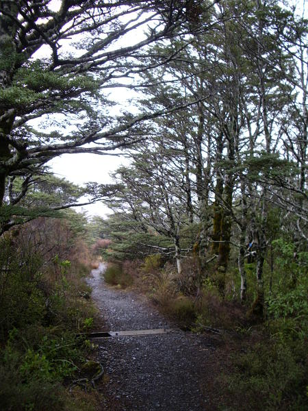 bush-walk.jpg