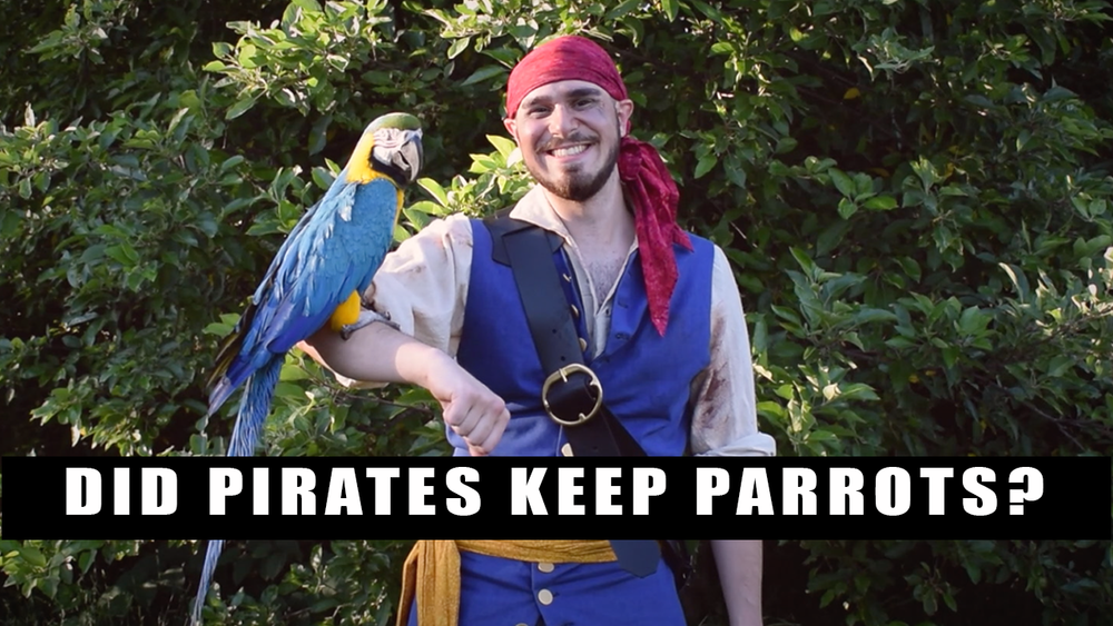 Pirates And Parrots: Fact Or Fiction?