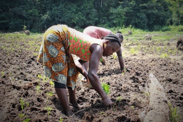Seeds of Change: - Challenges and solutions to Liberia's agro-input supplyRead more: