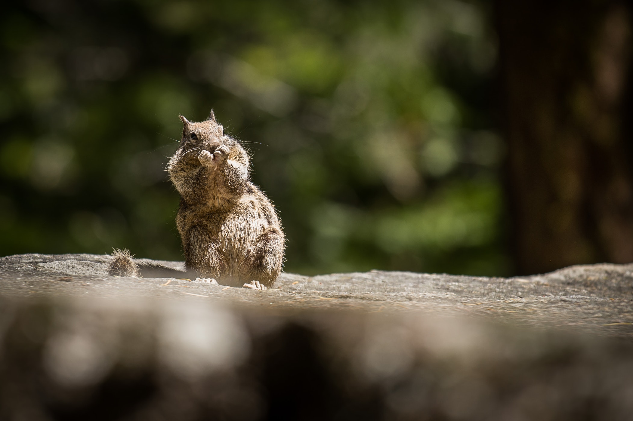 How To Keep Squirrels Out Of Your Garden — Phantas Magorium