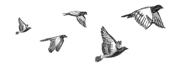 flock-pigeon-loft-creative-communications
