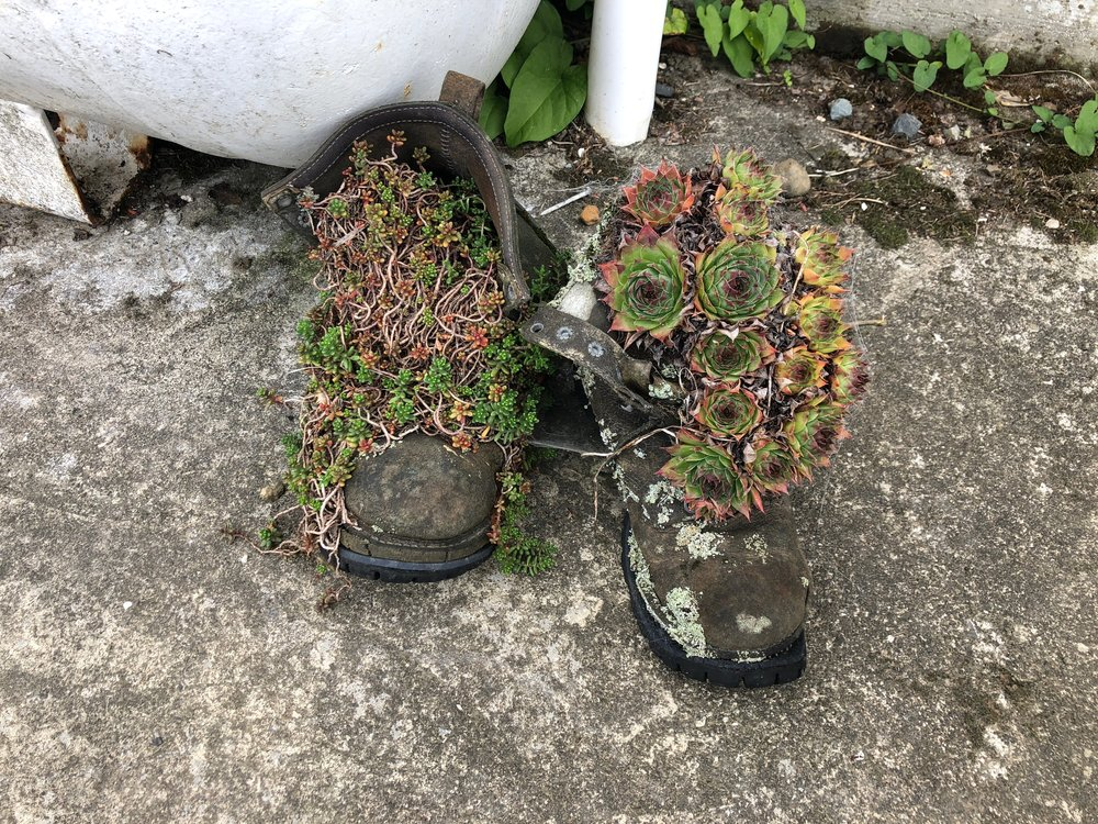 I loved these boots with the plants growing in them