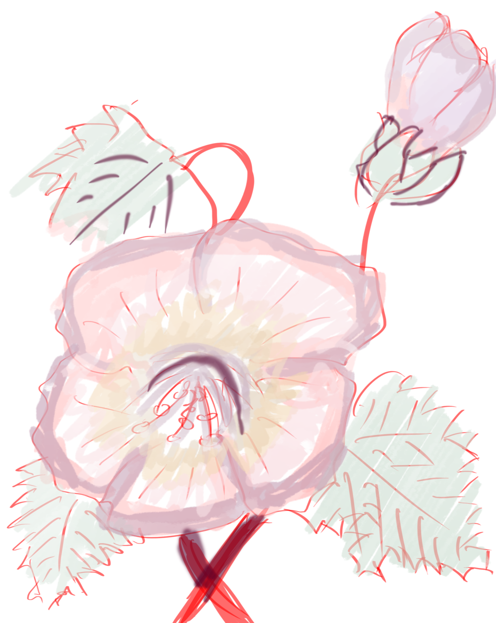 Butt ugly flower for reference, drawn with a Wacom Cintiq on Photoshop CC