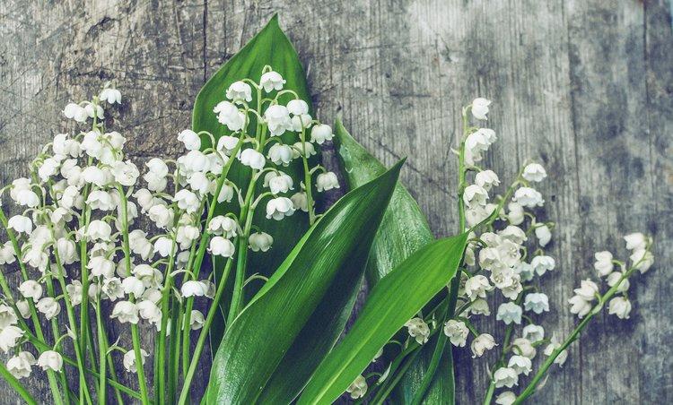 bloom-blooming-blossom-458787.jpg