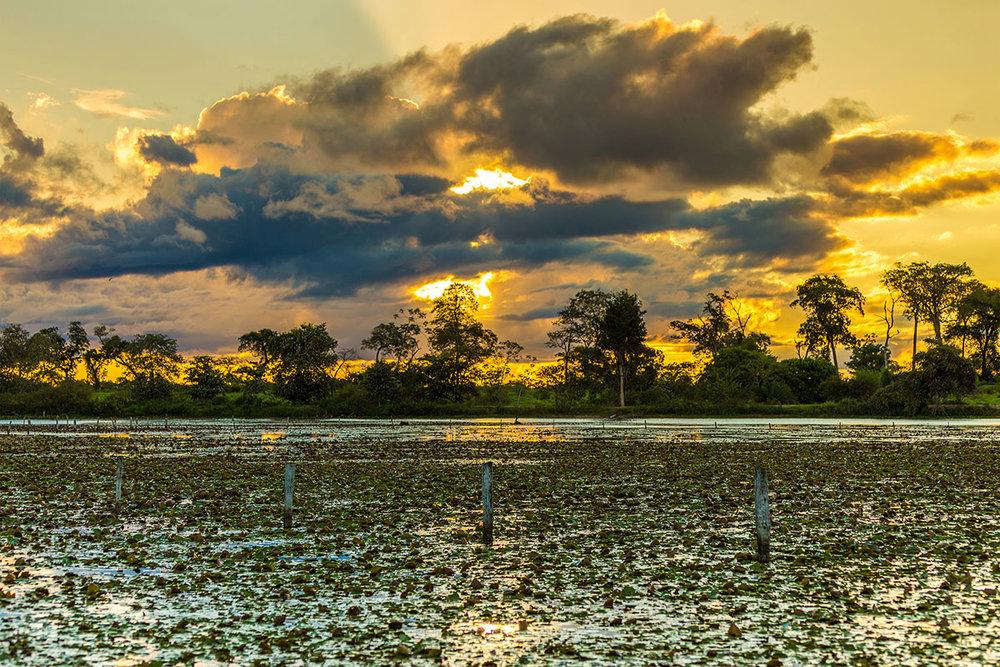 Pantanal Viaggio Holiram Hirundo Brasile.jpg