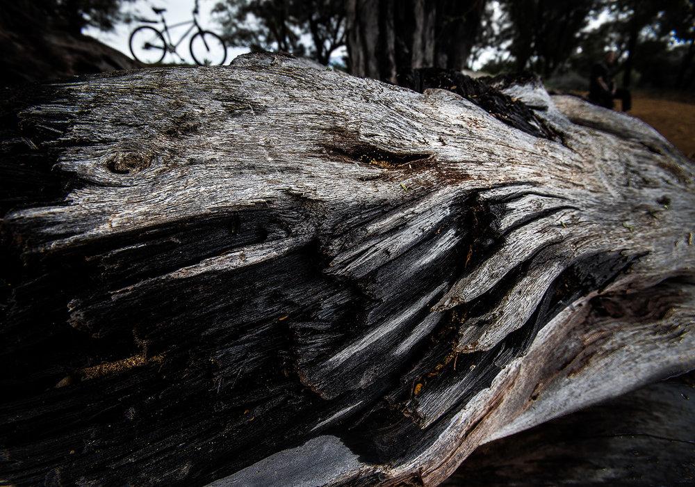 Driftwood 4