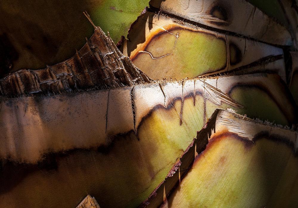 Palm Pattern 1