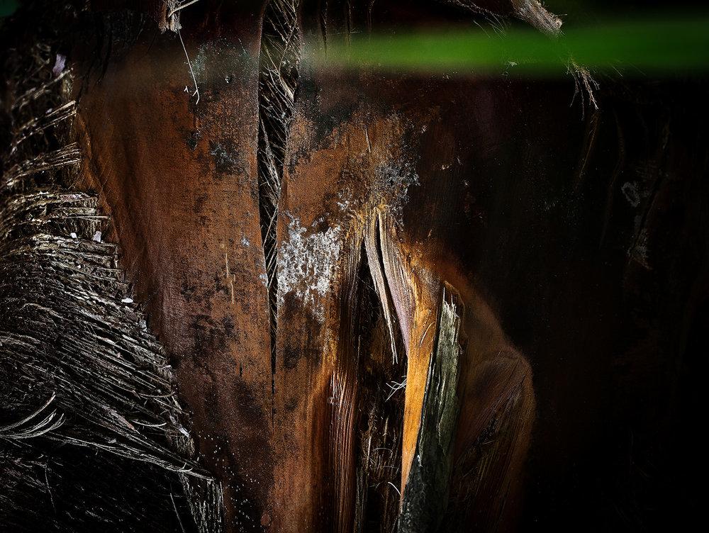 Palm Aperture