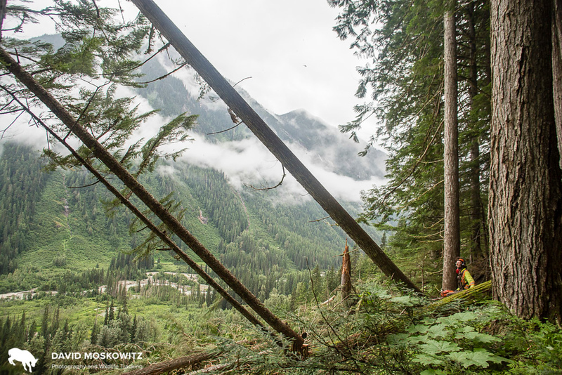 Clearcutting the Rainforest -