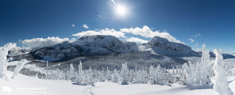 Home range of the North Columbia herd in winter. Monashee Mountains, British Columbia.