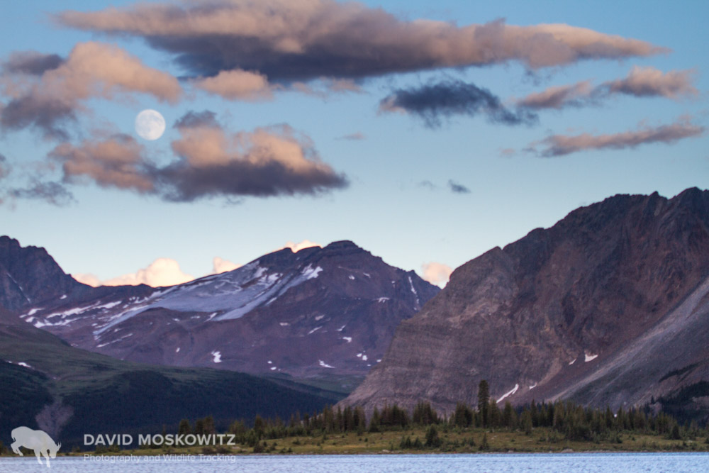 A full moon rises over a dying glacier in the Canadian Rockies. Climate change is affecting the ecosystem that mountain caribou call home. Alberta.