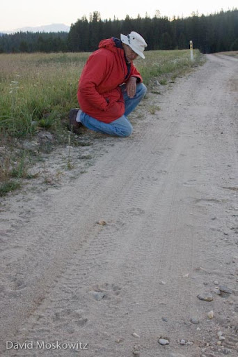 Don Taves inspects the trail of a wolf trotting down a dirt road.