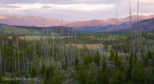 The landscape, typical of the mountains of central Idaho shows conifer forests, dominated by lodgepole pine (Pinus contorta) in various stages of regeneration after naturally occuring fires. Interspersed are large wet and dry meadow systems.