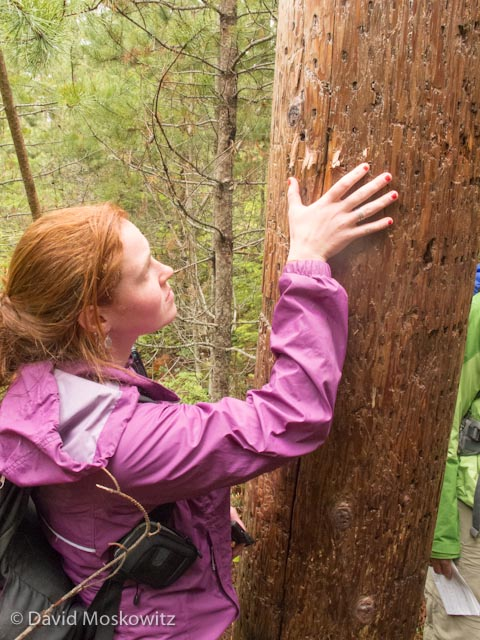 Susan Brown, a graduate student in the North Cascades Institutes Masters of Education program, assisted with the evaluation. Pictured here by a powerline pole that had been bitten and rubbed on by black bears.