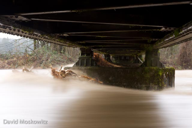 Under the old railroad trestle bridge over the Tolt River, WA.