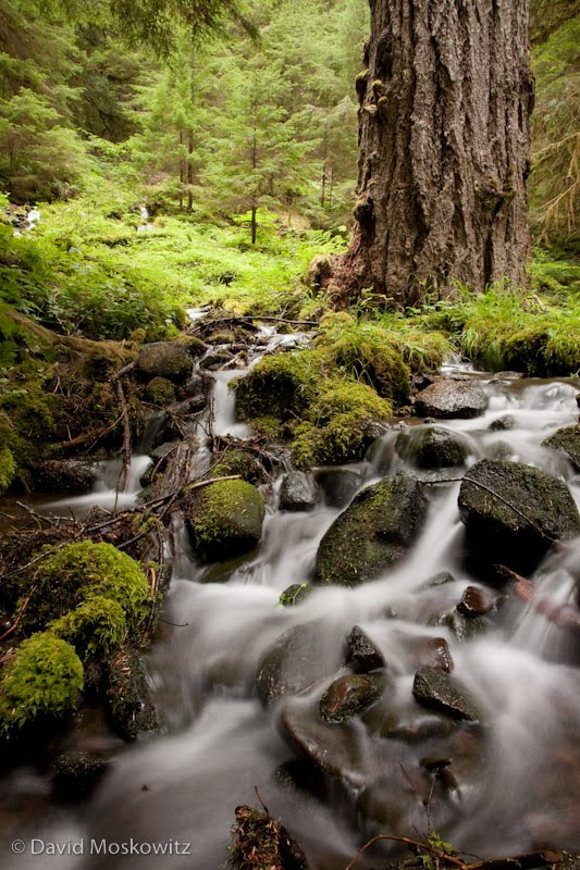 Stream in the Sol Duc River Valley, Olympic National Park.
