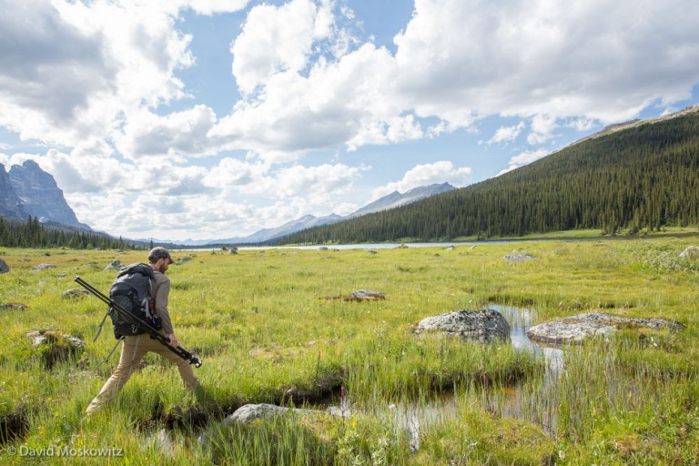 Marcus Reynerson making his way across a wet meadow system in the Tonquin Valley, Rocky Mountains. Jasper National Park.